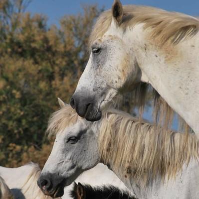 leadImage carousel 7 - On horseback in the heart of Po Delta Park