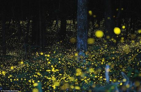 lucciole nel bosco  - Home